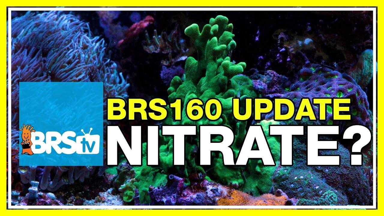 BRS160 Update - Time to dose Nitrate? | BRStv Tank Trials Ep-20
