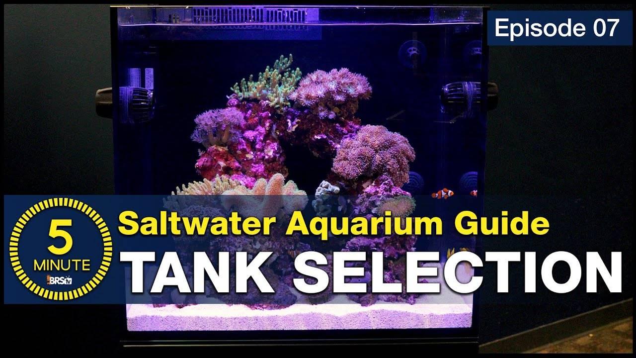See why we chose a 40 gallon breeder and 45 gallon Red Sea E-170 AIO saltwater aquarium setup