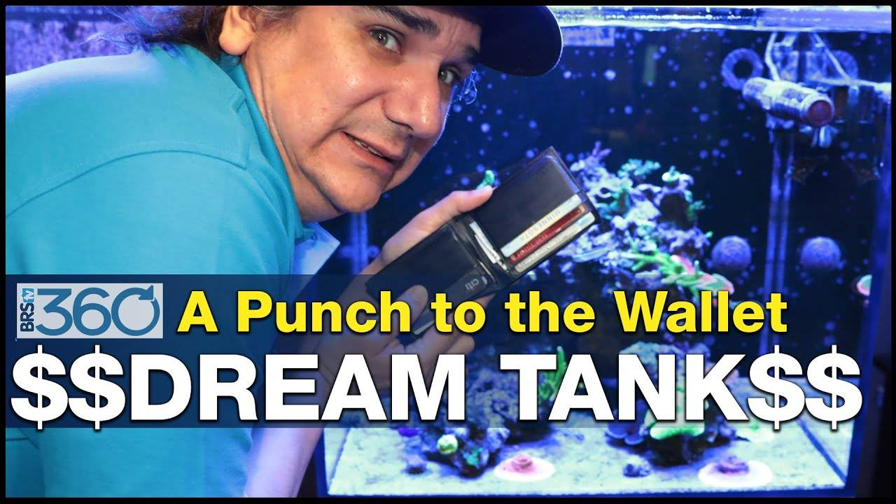 Ep.4 - How much does a dream saltwater reef tank cost to set up? | BRS360