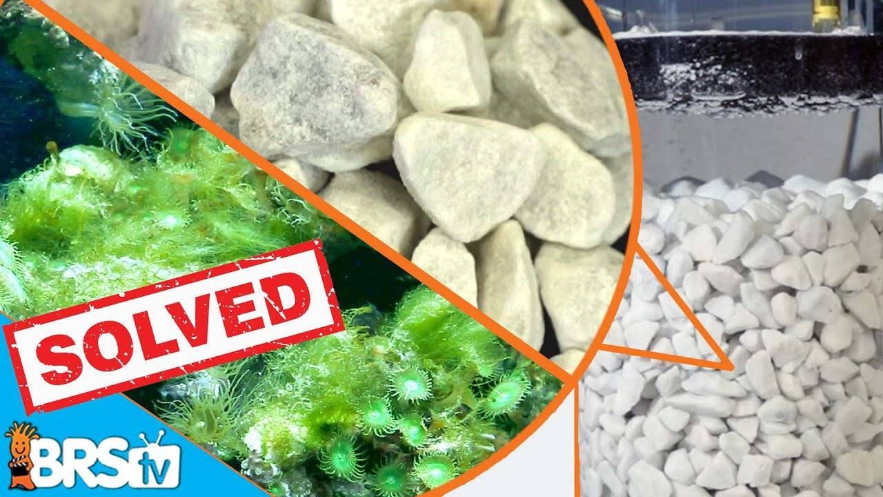 Are Calcium Reactors Acting As A Phosphate Factory In Our Reef Tanks?  - BRStv Investigates