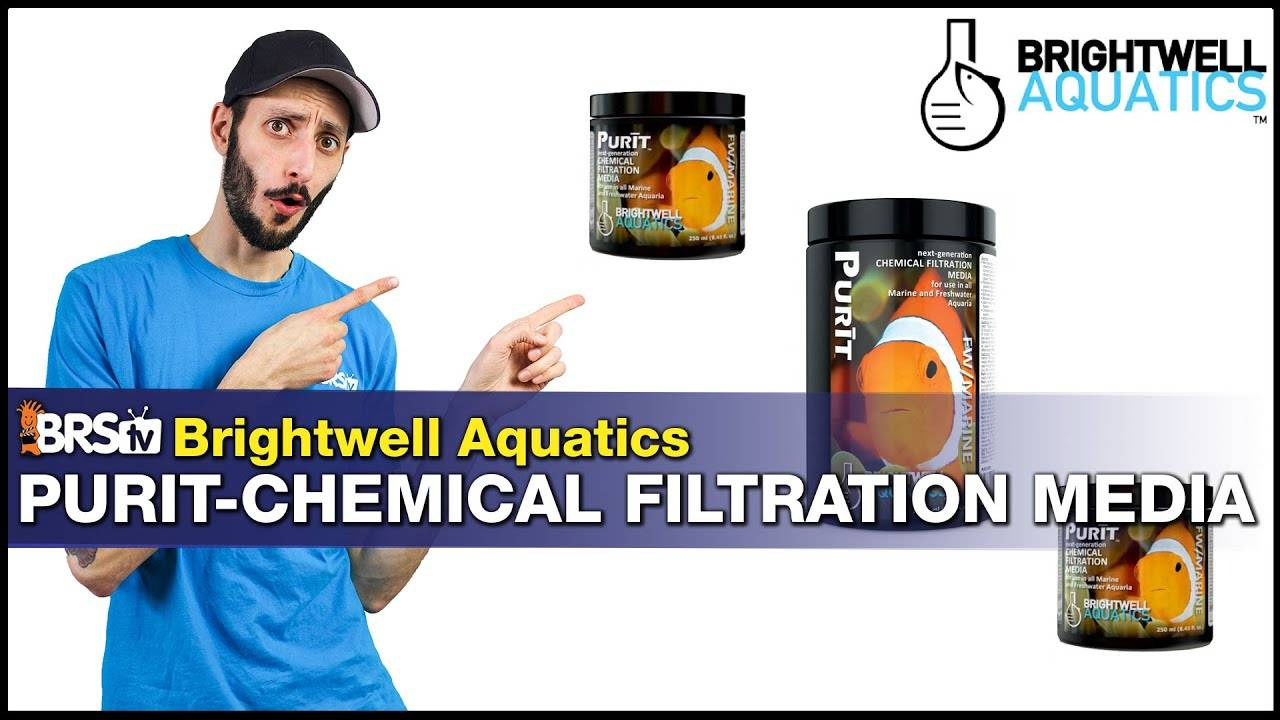 Birghtwell Aquatics Purit