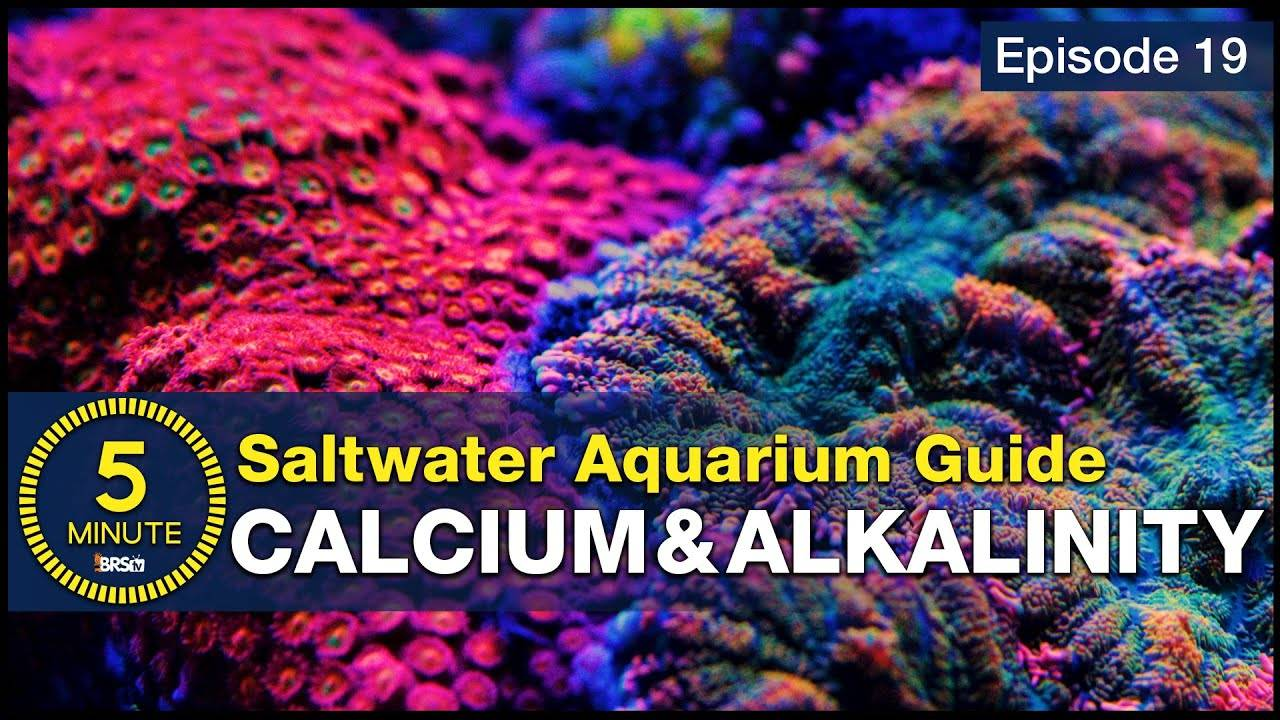 The cool part of reefing. Calcium, alkalinity & growing corals in the aquarium - A beginner's guide