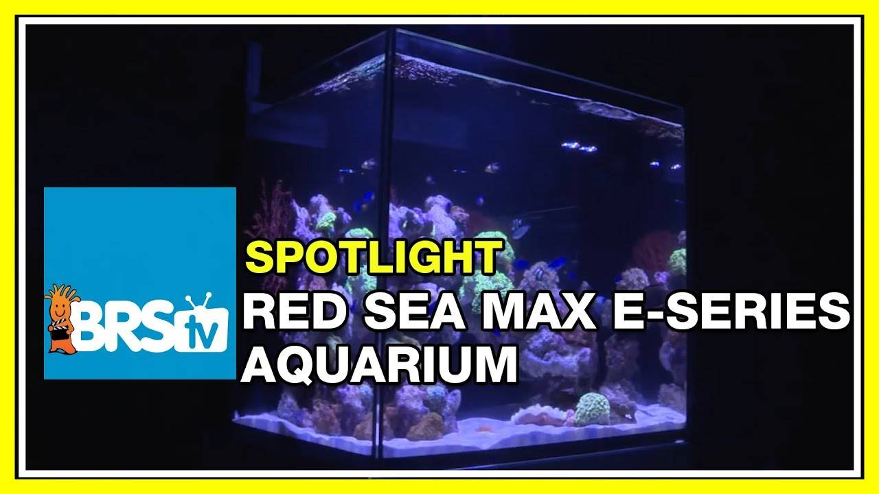 How to set up an all-in-one (AIO) reef tank - Rea Sea Max E-Series - BRStv