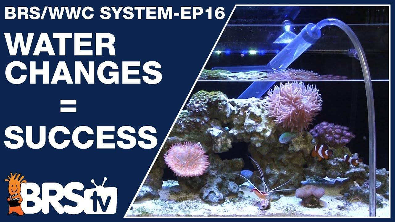 Long term success for your reef tank? Try water changes - The BRS/WWC System Ep16 - BRStv