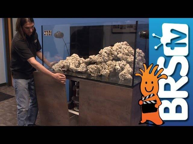 Aquascaping, Filtration, LED Lights & More - EP 2: Clownfish Harem Tank #clownharemtank