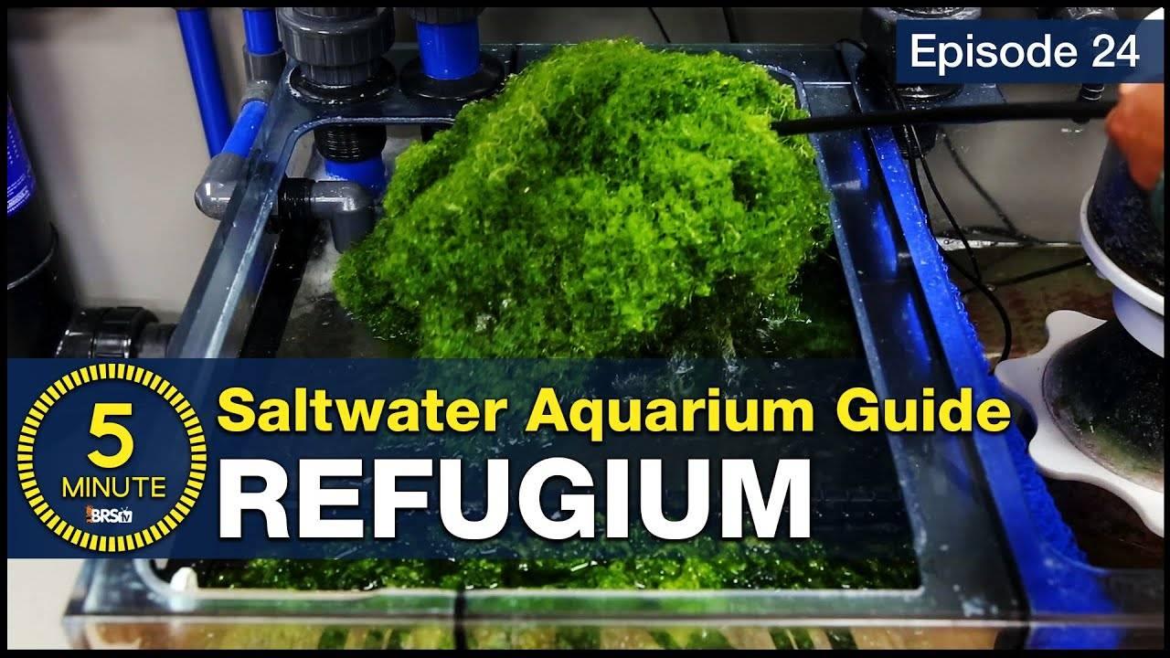 5 Minute Saltwater Aquarium Guide Episode #24 - Refugiums