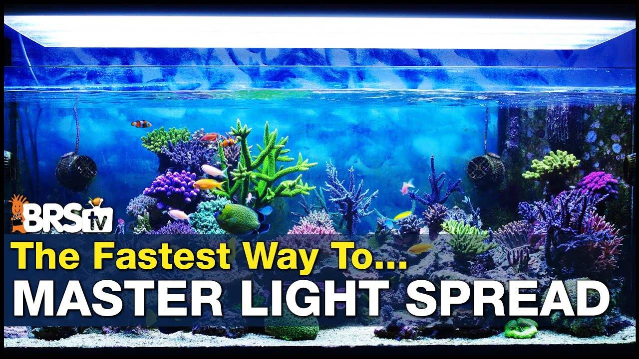 Master Spread - The Secret to Mimicking the Sun and Sky with Your Reef Tank Lighting!