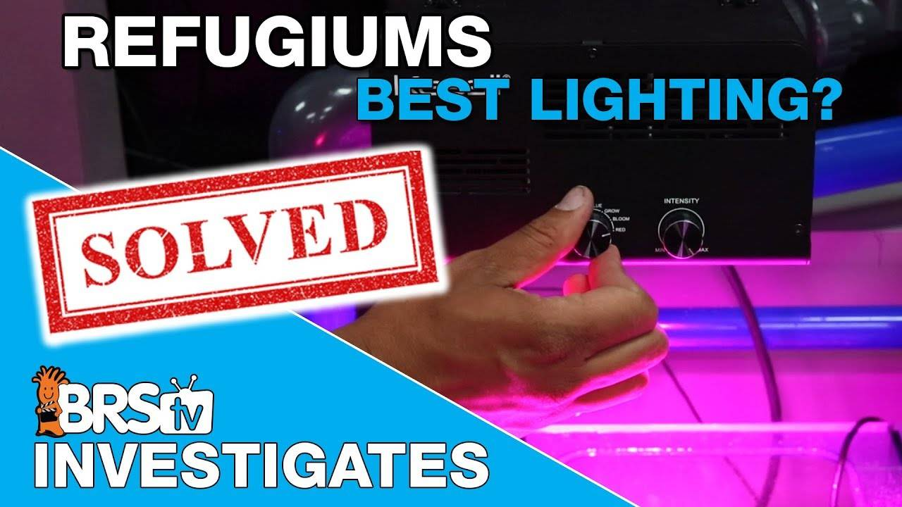 BRStv Investigates: PAR & Spectrum Testing for Effective Refugium Lights