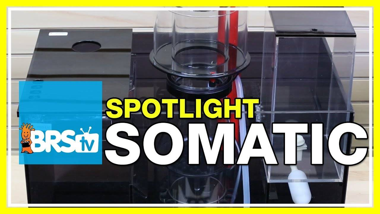 Spotlight on Somatic Skimmers, Sumps, and Upgrades - BRStv