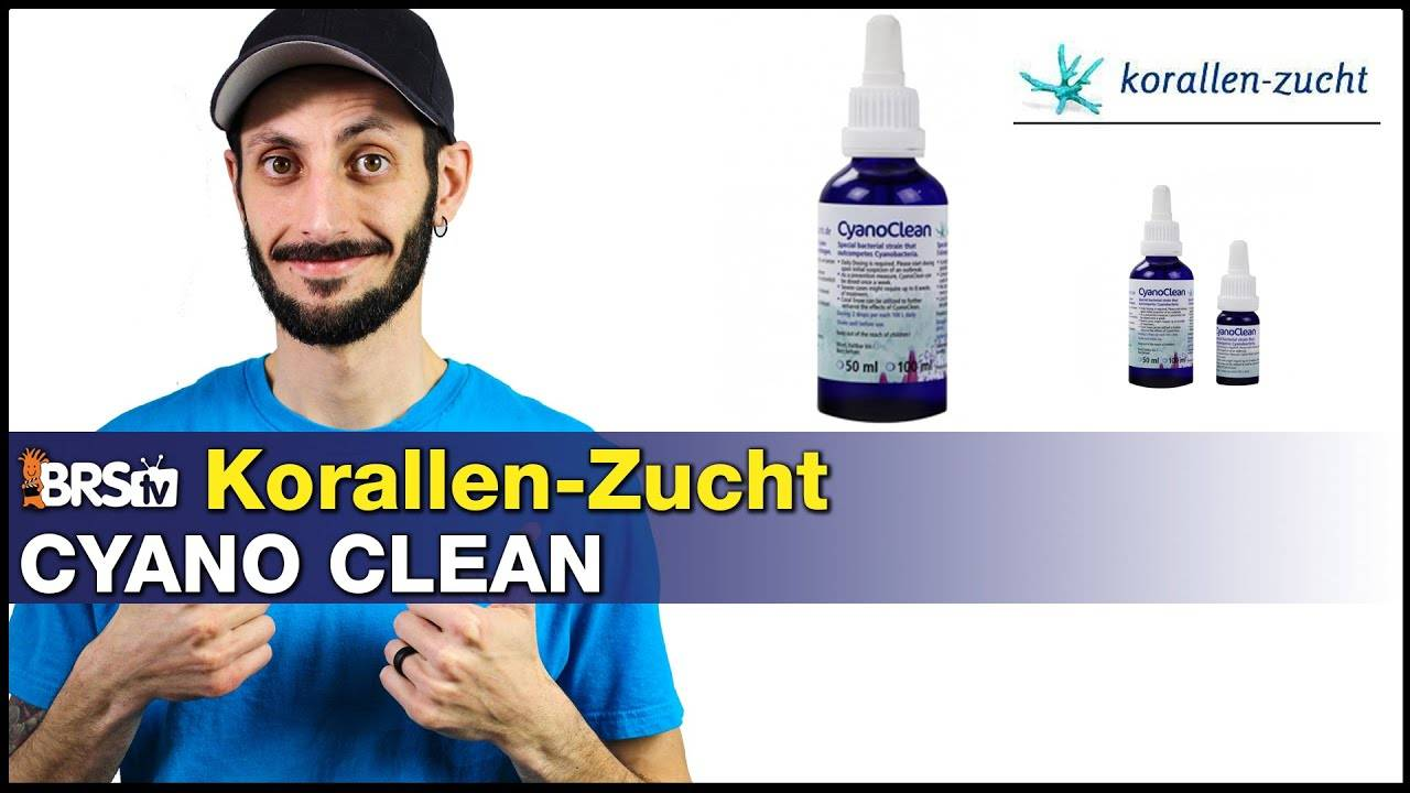 Korallen-Zucht Cyano Clean: A natural way to eliminate Cyanobacteria and keep it away!