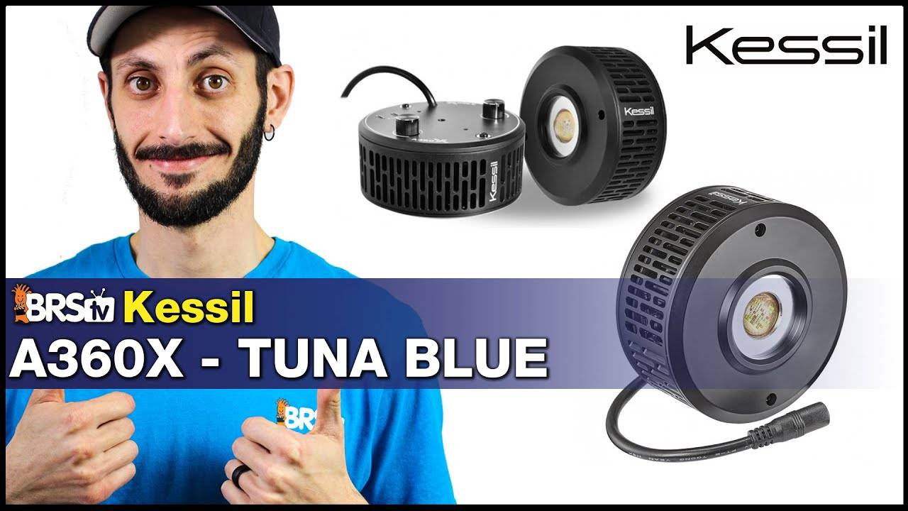 Kessil A360X LED Light - Easy Setup, Great Spread and Exceptional Shimmer