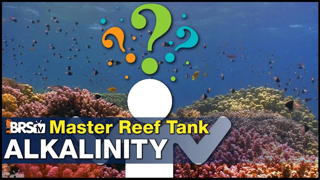 Master Reef Tank Alkalinity