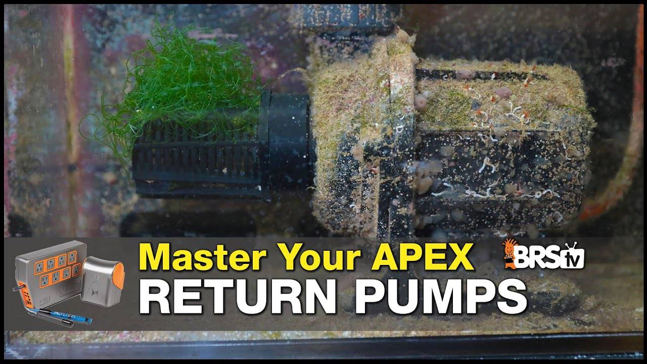 Master Your Return Pump With a Neptune Systems Apex