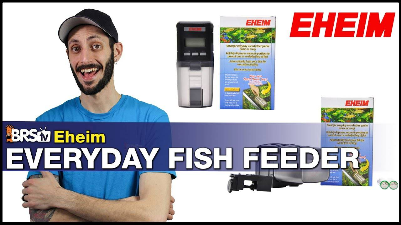 BRStv Product Spotlight - Eheim Everyday Fish Feeder