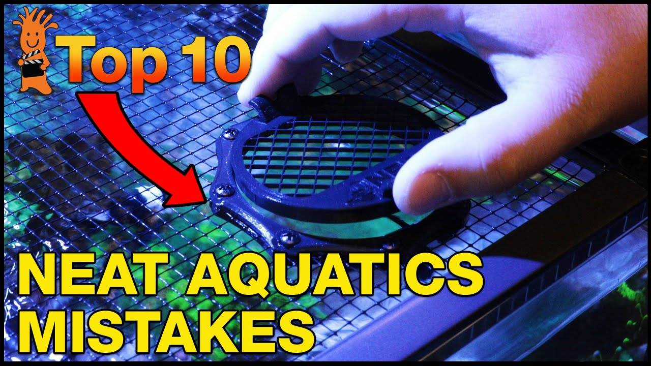 Top 10 Mistakes Using Neat Aquatics Accessories