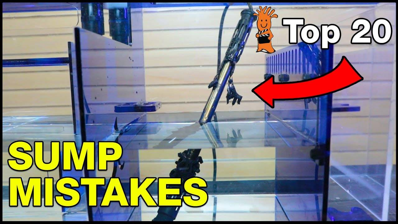 Top Aquarium Sump Mistakes You Don't Want To Make!