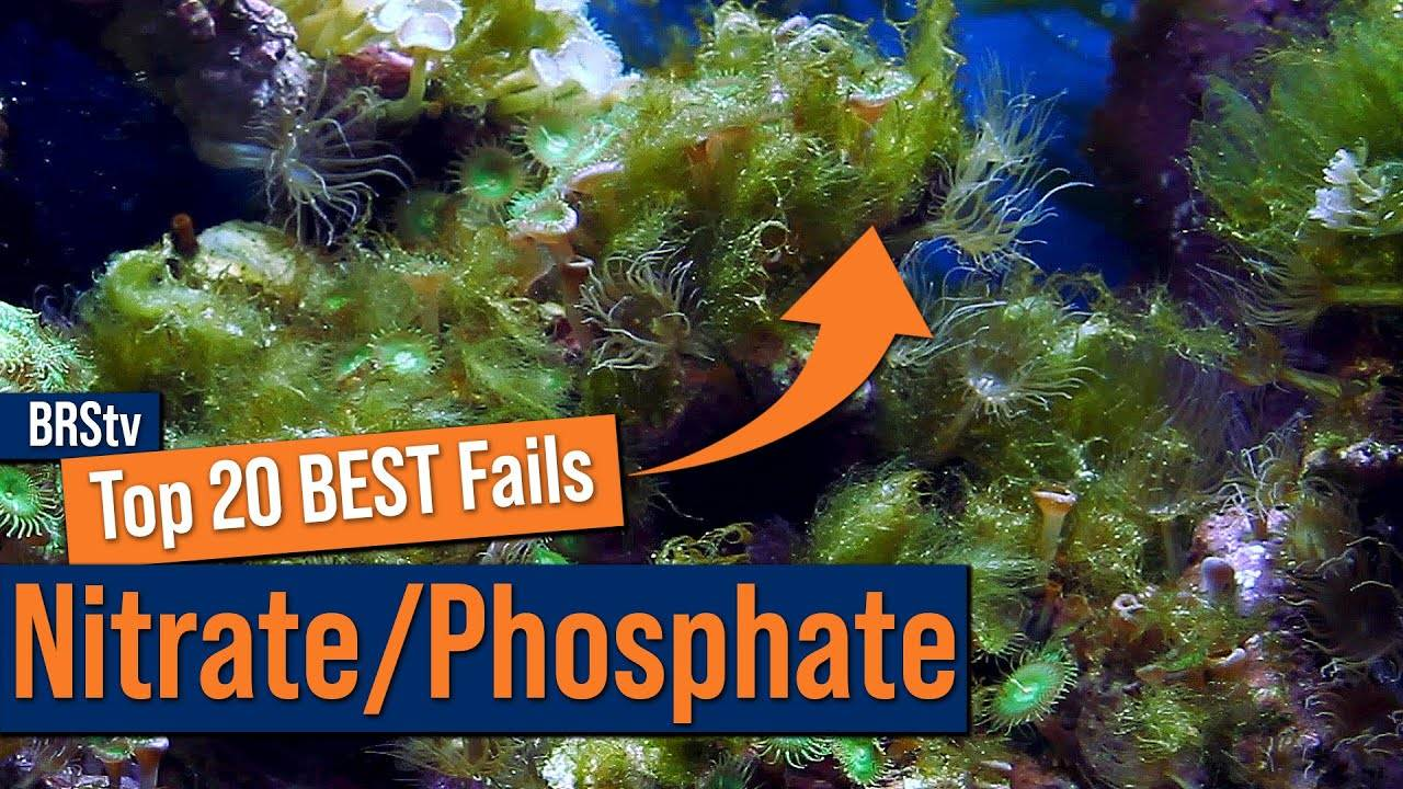 Top 20 Nitrate & Phosphate Mistakes