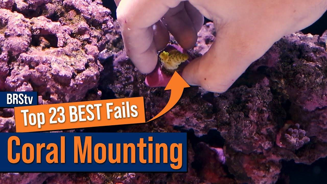 Top 23 Coral Mounting Mistakes