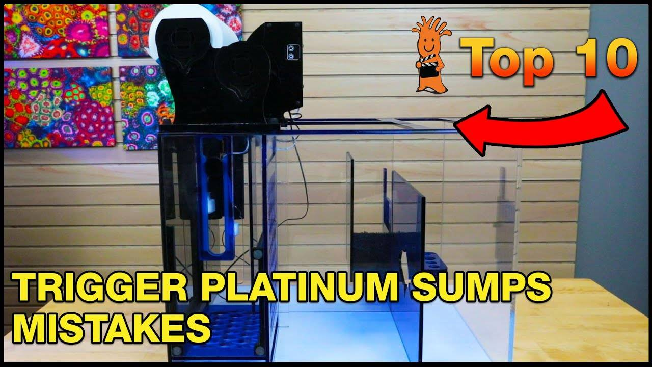 Top Trigger Systems Platinum Sump Mistakes