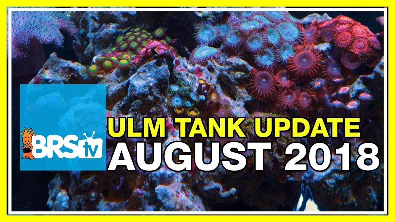 ULM Tank Trials Ep-23: The Great, The Good and The Ugly. - BRStv Investigates