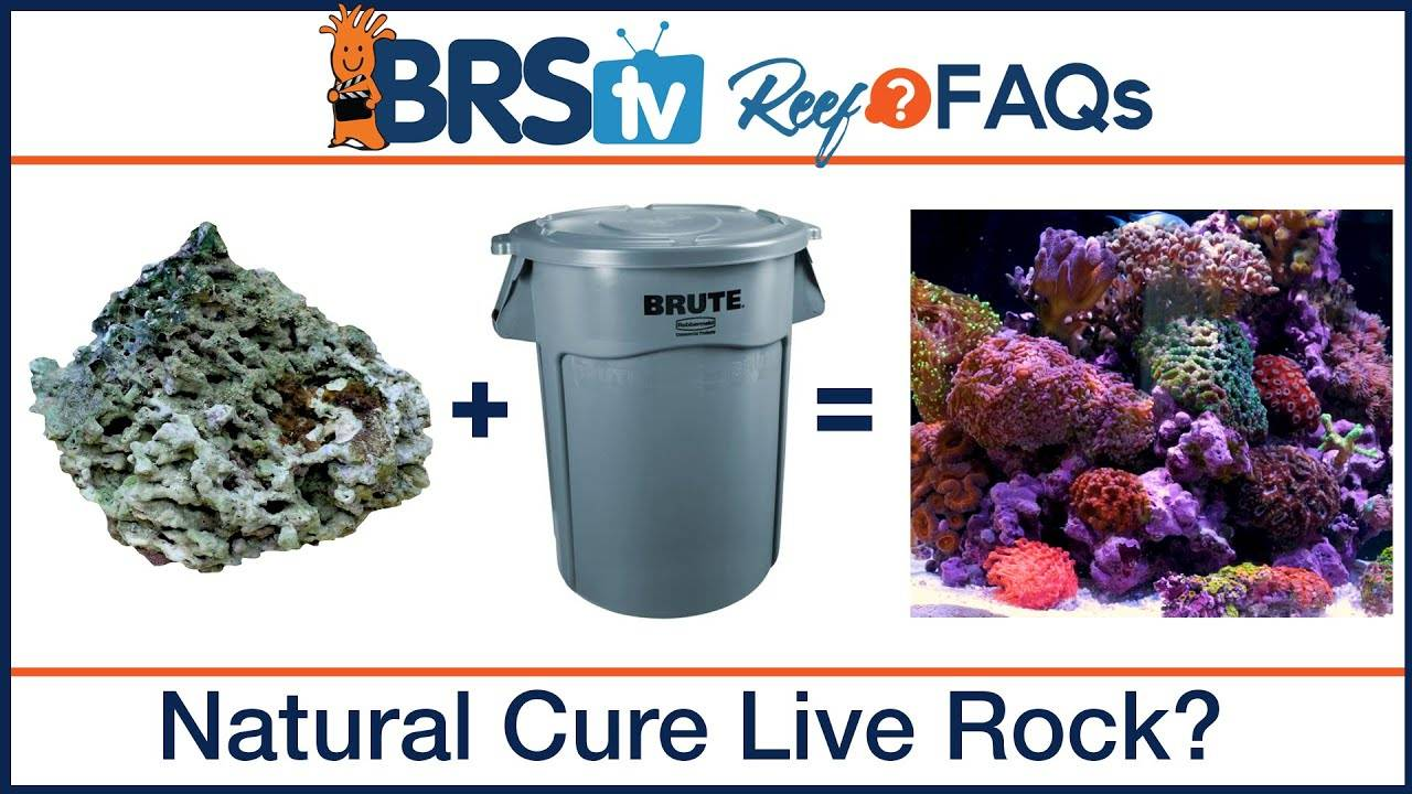 Natural curing live rock for saltwater fish tanks? - BRStv Reef FAQs