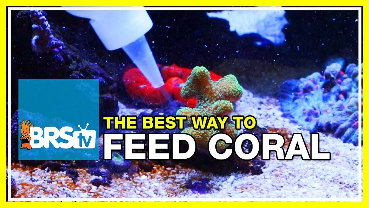 Week 39: Feeding corals - Do the claims meet expectations? | 52 Weeks of Reefing #BRS160