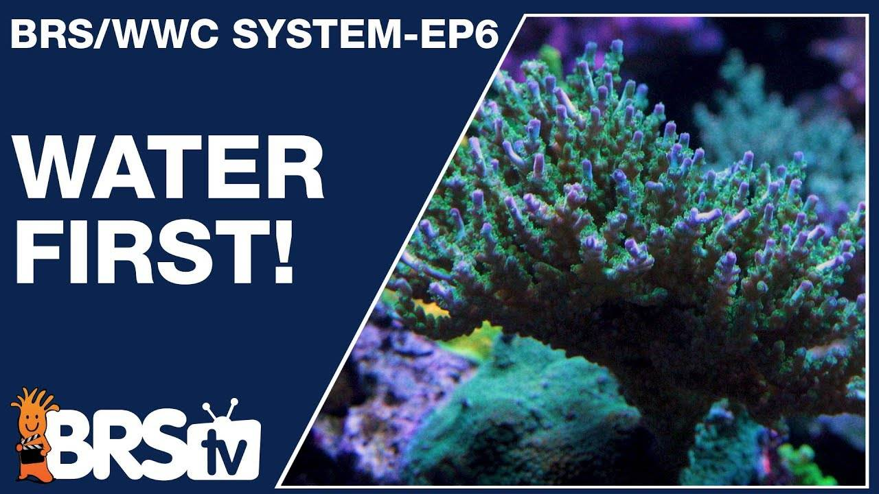 A simple & stable reef tank starts with water! - The BRS/WWC System Ep6 - BRStv