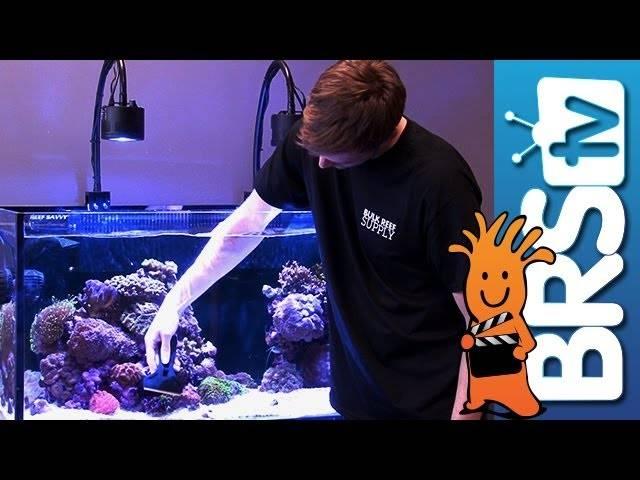 Keeping Your Aquarium Glass Clean - EP 3: Saltwater Aquarium Maintenance