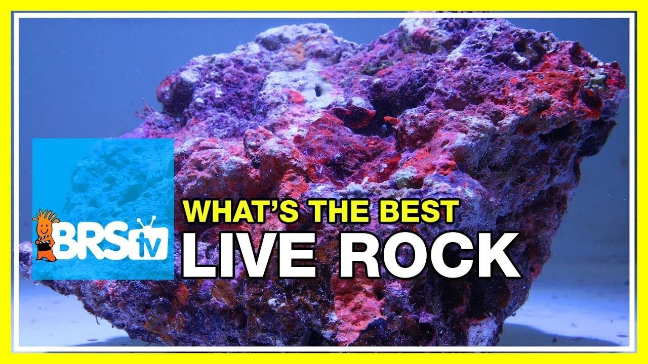 Week 10: What you may not have known about live rock | 52 Weeks of Reefing #BRS160
