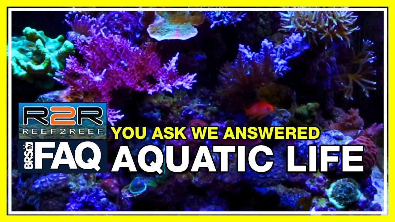 R2R FAQ: Answering your questions about the Aquatic Life Hybrid!
