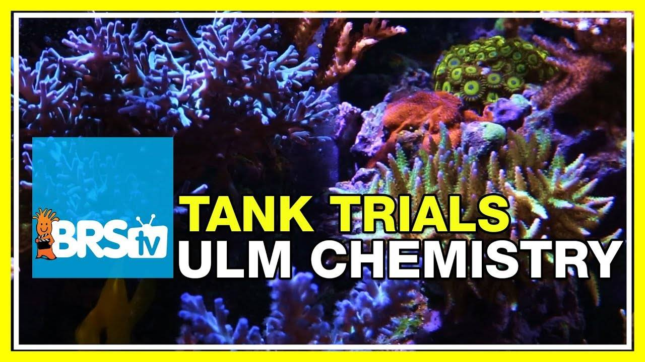 Reliable & Low Maintenance Dosing Options | BRStv Tank Trials Ep14