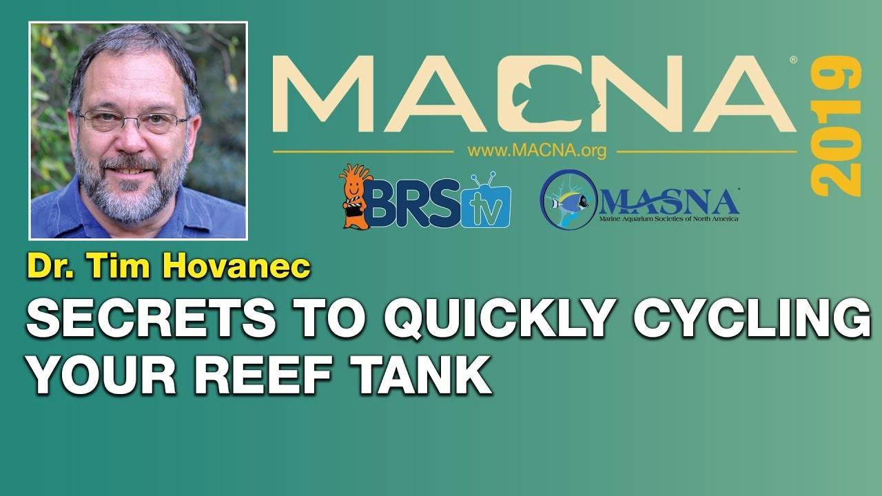 Dr. Tim Hovanec: How to harness bacteria to cycle your saltwater tank quickly! | MACNA 2019